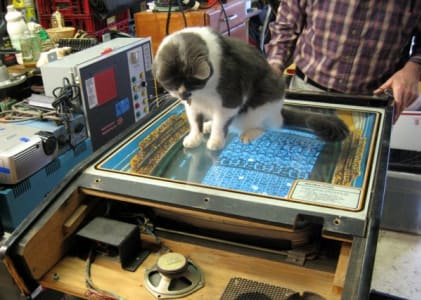 cat perched atop glass covering game display