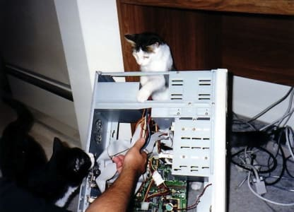 one cat watches as another cat pokes around inside a caseless computer tower.