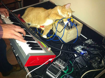 cat on desk behind musical keyboard messing around with cables running from various pedals and switches.