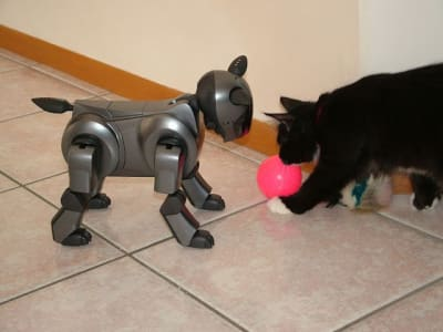 cat investigating ball and robotic dog.