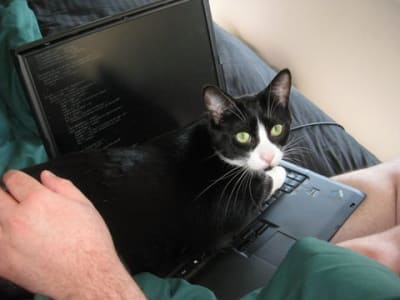 cat looking brazenly into the camera while laying across keyboard of laptop that is perched on human's lap.