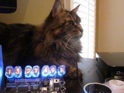 fluffy cat posing regally behind Nixie Tube Clock.