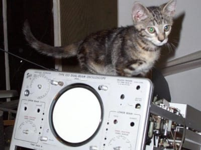 kitten exploring a disassembled oscilloscope that is at least twice the kitten's size.