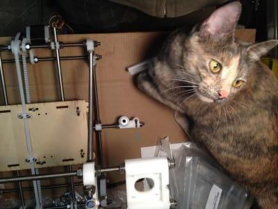 cat standing next to a 3d printer gazing off camera.