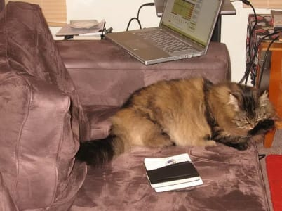 fluffy cat licking its paw on velvet couch next to a laptop.