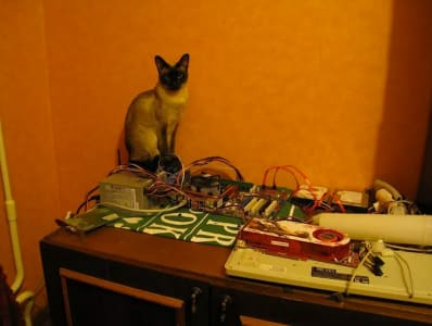 siamese cat perched on a wired up project.