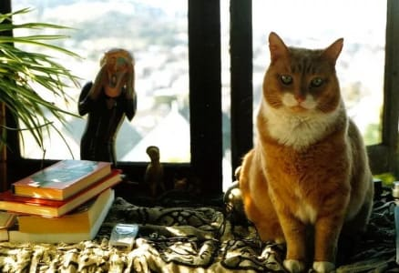 "cat on a windowsill next to a sculpture of ""the scream""."