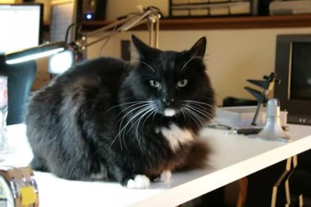 A black cat sits on a white work bench.
