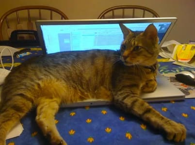 A cat sits on a laptop on top of a table. two chairs are visible in the background.