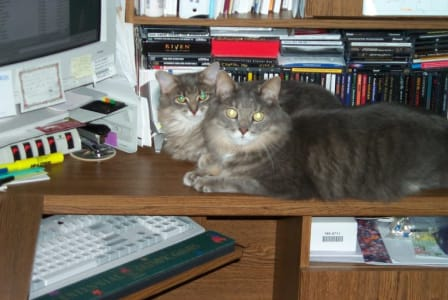 Two cats sit on a desk near a computer and in front of many compact disks.