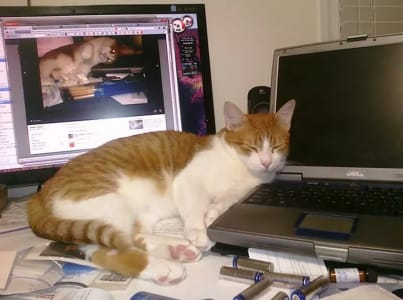 Tabby cat sleeps on a cluttered desk with its head on a laptop. A computer monitor is visible in the background.