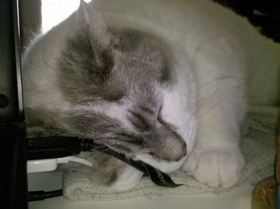 A light grey cat sleeps pressed up against white and black USB cables.