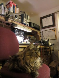 A long haired grey cat sits perched on a red office chair next to a cluttered work desk. college diplomas are hung on a wall to the right.