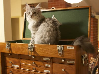 "A long haired grey cat sits in a wooden tool box in a drawer labelled ""Kittens"""