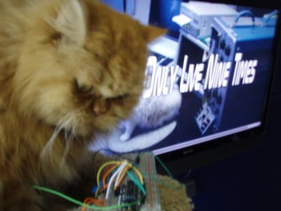 "A long haired orange cat stares at wires. text on computer screen behind cat says ""Only live nine times"""