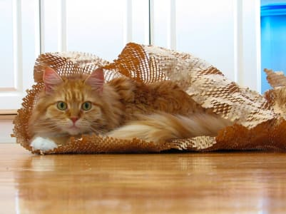 A long haired orange cat sits in brown paper packaging material