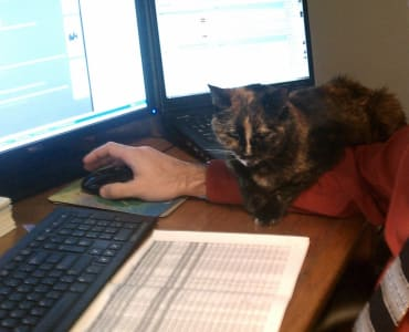 calico cat sitting on top of human companion's arm, companion's arm on top of desk holding computer mouse
