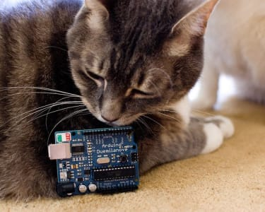 brownish grey and white cat laying on the floor sniffing an arduino duemilanove