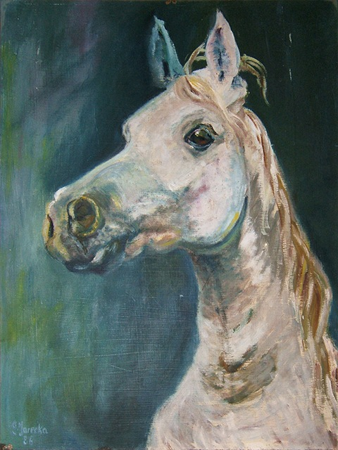 Portrait painting of a white horse by Grazyna Adamska Jarecka
