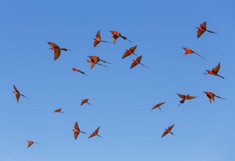 SealousNP-ExoticBirds