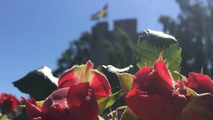 Bild med blommor i förgrunden, och Visbys mur med svensk flagga i bakgrunden.