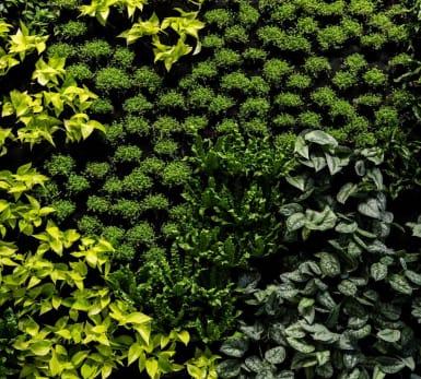 Flera variationer av grönska.