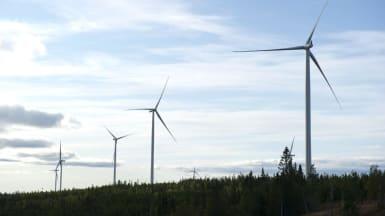 Fem vindkraftverk sticker ur skog och upp i skyn.