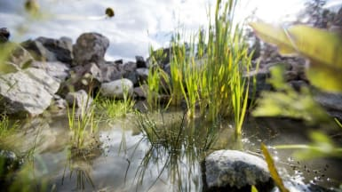 Närbild på vass och annan biodiversitet.