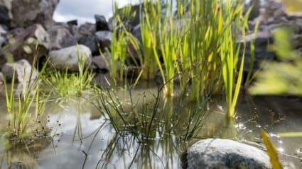 Bild på biodiversitet i Ohkola, Finland.