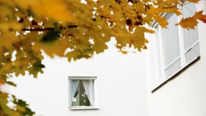 Bild på en vit husfasad med fönster, medan trädgrenar och löv sticker ut alldeles framför kameran.