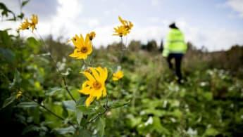 Bild på några blommor i förgrunden, med en byggarbetare och natur i bakgrunden.