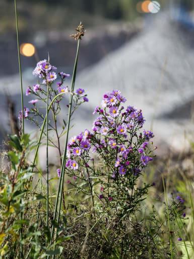 Kundportalen. en bild föreställande blommor och annan växtlighet i förgrunden. I bakgrunden syns en av NCC:s anläggningar för ballast