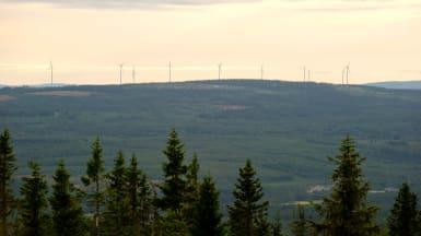 Bild på ett rullande skogslandskap med vinkraftverk längst i bakgrunden.