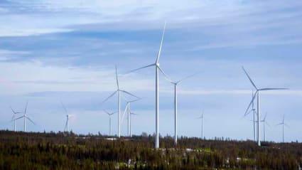 Flera vindkraftverk sticker upp ur ett snöbeklätt skogslandskap.
