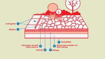 Illustration på hur man gör en naturstenssättning.