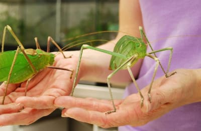 Arachnacris - © Attention Deficit Disorder Prosthetic Memory Program