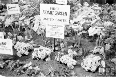 Atomic Gardening - © Attention Deficit Disorder Prosthetic Memory Program