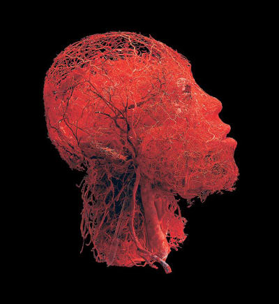 Body Worlds - © Attention Deficit Disorder Prosthetic Memory Program