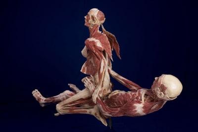 Body Worlds - © Attention Deficit Disorder Prosthetic Memory Program
