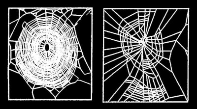 Effects Of Psychoactive Drugs On Spiders - © Attention Deficit Disorder Prosthetic Memory Program