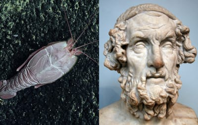 Organisms Named After Famous People - © Attention Deficit Disorder Prosthetic Memory Program