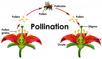 Pollination - © Attention Deficit Disorder Prosthetic Memory Program