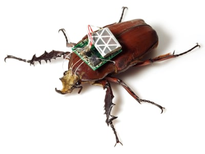 Remote Control Beetles - © Attention Deficit Disorder Prosthetic Memory Program
