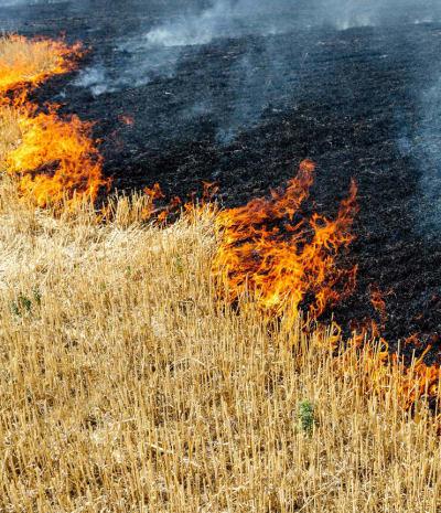 Stubble Burning - © Attention Deficit Disorder Prosthetic Memory Program