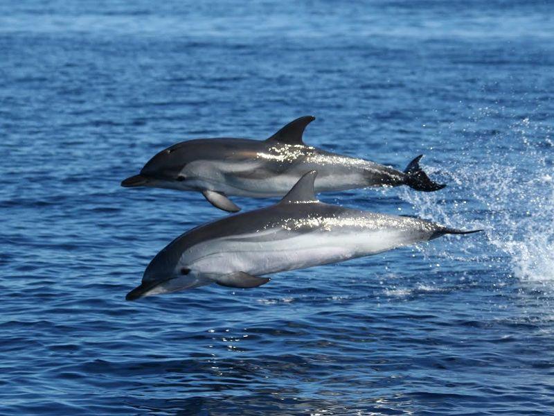 vacanze in barca a vela delfini
