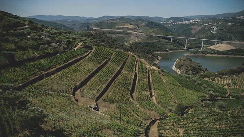 Vinhas no Douro