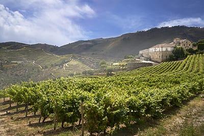Kranemann Wine Estates