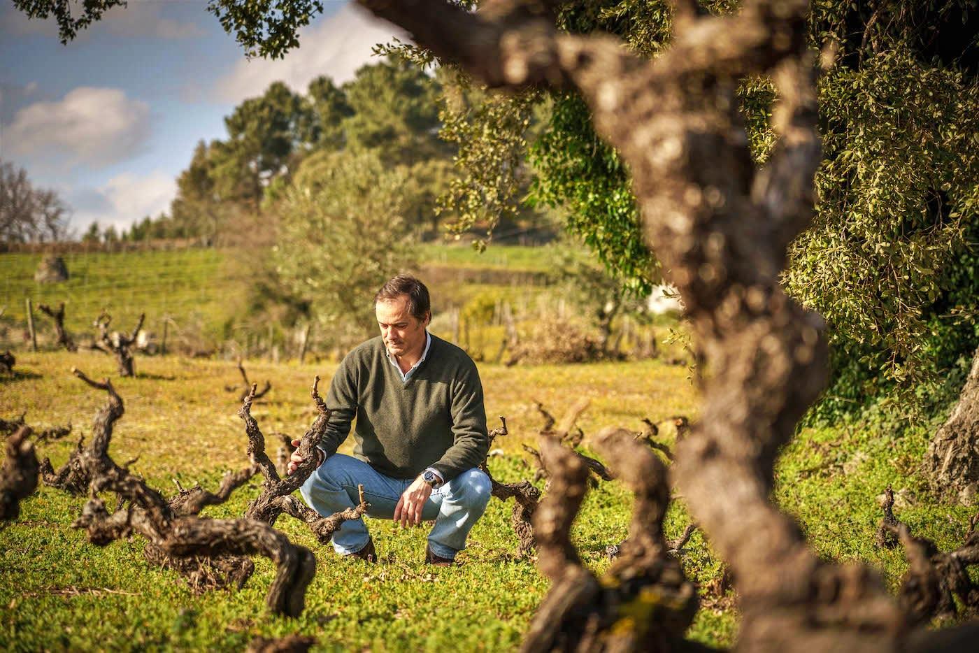 O enólogo Luis Cabral de Almeida nas Vinhas Velhas de Portalegre
