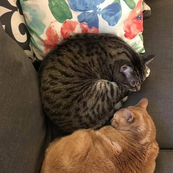Our sweet cats, Bosco and Bug