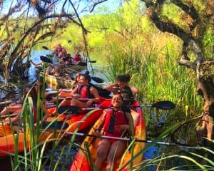 Kayak or Canoe Eco Tour, Mangrove Tunnel - 3 Hours